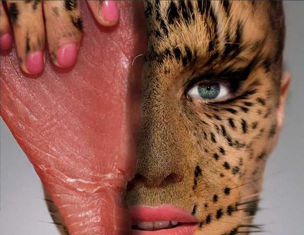 animalskin