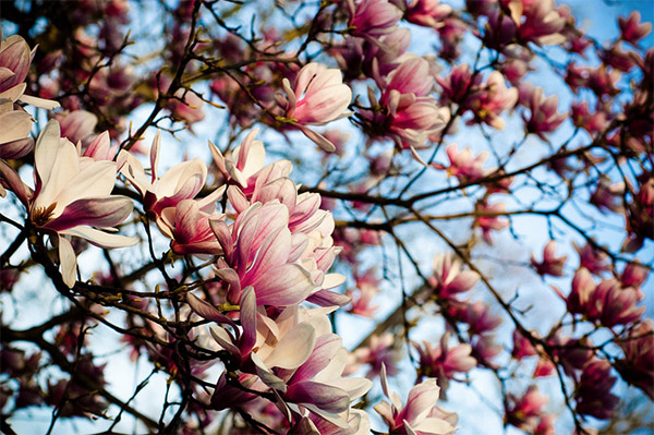 flowery backgrounds