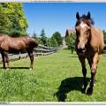 horses-final1