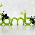 panda_bamboo_720