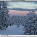 winter-trees1